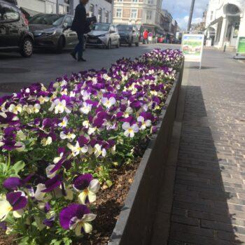 Blomster i Rosensgade